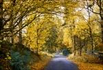 En Skånsk slingrig skogsväg vid Söderåsen